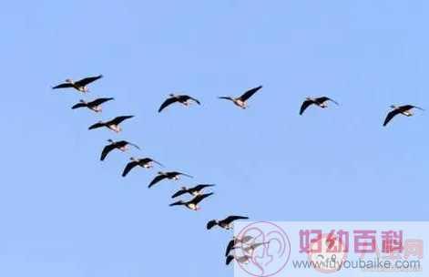 鸿是江边鸟的下联是什么 鸿是江边鸟的下联合集