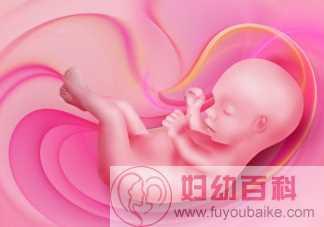 胎儿性别是怎么发育形成的 胎儿性别发育在多少周