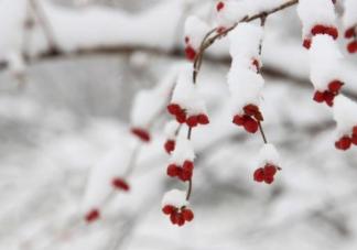 大雪节气吃什么好  2018大雪养生食谱推荐