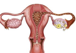 输卵管被切除后还会排卵吗 输卵管切除能否自然怀孕