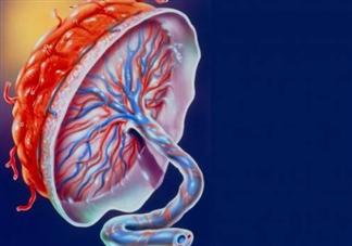 胎盘厚度多少正常 胎盘厚度异常有什么问题