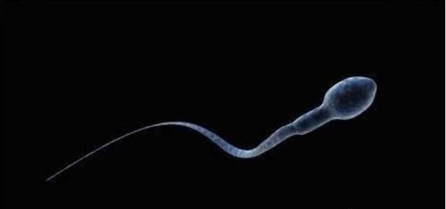 怎么在家测精子质量好不好 自测精子质量的方法