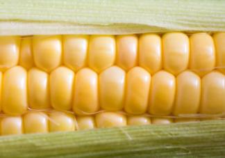 宝宝玉米食谱大全2019 玉米辅食制作方法步骤